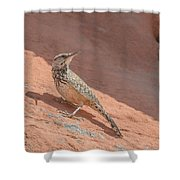 Cactus Wren Shower Curtain