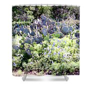 Cactuses  Shower Curtain