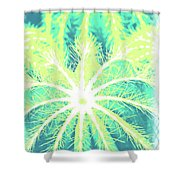 Cactuses3 Shower Curtain