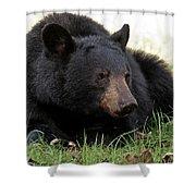 Cades Cove Bear II  Shower Curtain