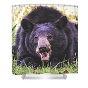 Cades Cove Black Bear Shower Curtain