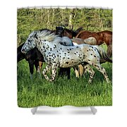 Cades Cove Horses Shower Curtain