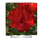 Caecilla's Rose Garden Shower Curtain