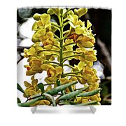 Caesalpinia Cacalaco In Huntington Desert  Gardens In San Marino-california  Shower Curtain