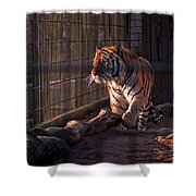 Caged King Of The Jungle Shower Curtain