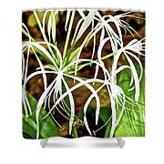 Cahaba Lily In Huntington Botanical Gardens In San Marino-california Shower Curtain