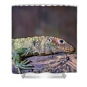 Caiman Lizard Shower Curtain