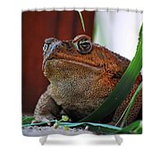Cain Toad Shower Curtain