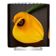 Cala Lily Tryptych Shower Curtain