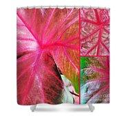 Caladium Red Trio Shower Curtain