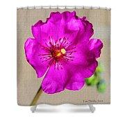 Calandrinia Flower Shower Curtain
