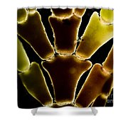 Calcareous Seaweed, Lm Shower Curtain