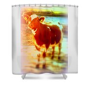 This Calf Has A Hope For A Long And Happy Life But How And When Will It End   Shower Curtain