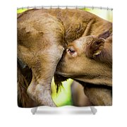 Calf Shower Curtain