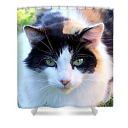 Calico 2 Shower Curtain