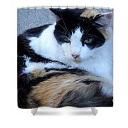 Calico 3 Shower Curtain