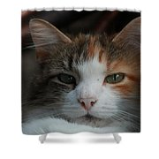 Calico Shower Curtain