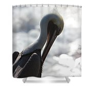 California Brown Pelican 1 Shower Curtain