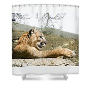 California Cougar Shower Curtain