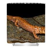 California Giant Salamander Shower Curtain