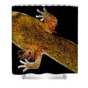 California Giant Salamander Larva Shower Curtain