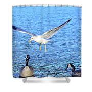 California Gull - Canada Geese Shower Curtain