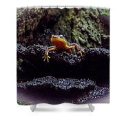 California Newt 2 Shower Curtain
