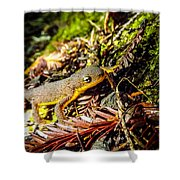 California Newt 3 Shower Curtain