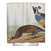 California Partridge Shower Curtain