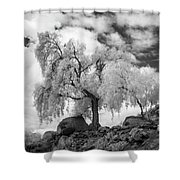 California Pepper Tree Shower Curtain