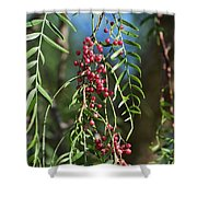 California Pepper Tree Leaves Berries I Shower Curtain