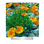 California Poppie In River Rock Shower Curtain