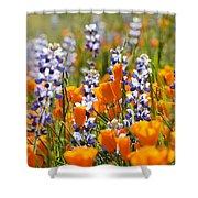 California Poppies And Lupine Wildflowers Shower Curtain