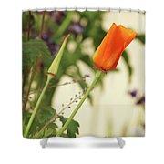 California Poppies In The Garden Shower Curtain