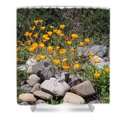 California Poppies Photograph Shower Curtain