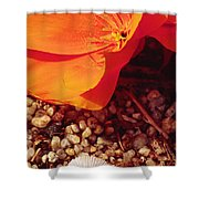 California Poppy And Scallop Shell Shower Curtain