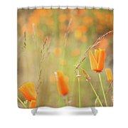 California Poppy Field 4 Shower Curtain