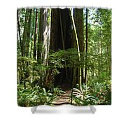 California Redwood Trees Forest Art Shower Curtain