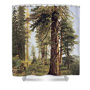 California Redwoods Shower Curtain