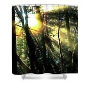 California Redwoods Shower Curtain by Richard Ricci