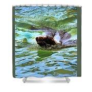 California Sea Lion-1611 Shower Curtain