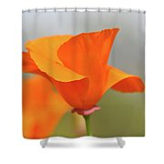 California State Poppy Macro Shower Curtain