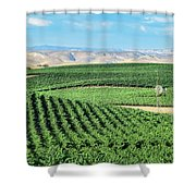 California Vineyards 1 Shower Curtain