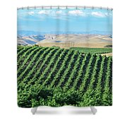 California Vineyards 2 Shower Curtain