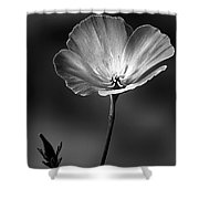 Californian Poppy Shower Curtain