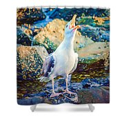 Call Of The Gull Shower Curtain