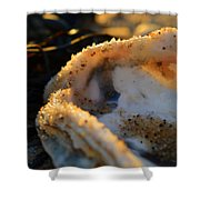Call Of The Sea Shower Curtain