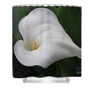Calla Remembrance Shower Curtain