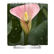 Calla In The Mist Shower Curtain