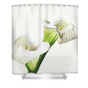 Calla Lilies No 1 Shower Curtain